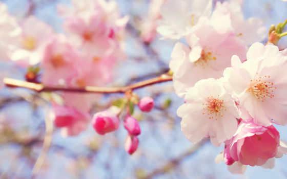 розовый, cvety, flowers, images, высокого, full,