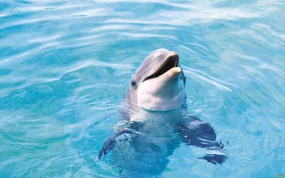дельфина, картинка, красивый, desktopwallpaper, миро, дельфин, animal, delfinovyi, underwater