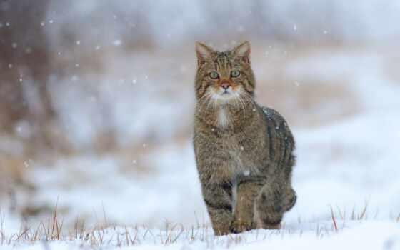 кот, снег, winter, погода, wild, funny, animal, return, random