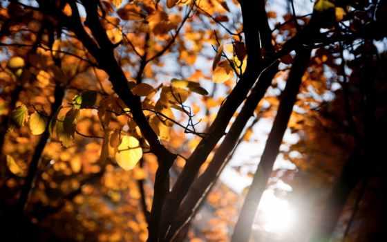 makro, листья, дерево