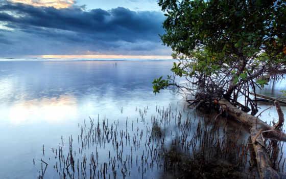 которых, есть, тег, всех, trees, landscape, море, небо, anywalls, oblaka,