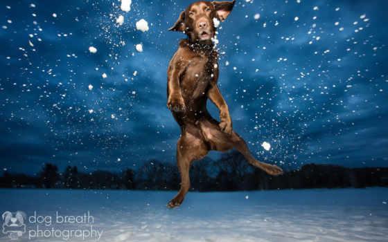 zhivotnye, снежные, снегу, янв, снег, снежная, подборке, животных, собаки, фокс, сегодняшней,