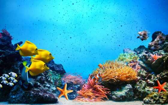 underwater, marin, sous