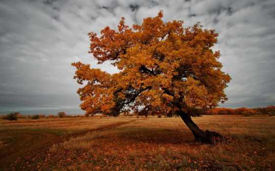 осень, дерево, природа, поле, landscape, листва,