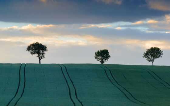 поле, land, hill, облако, заставка, дерево, небо