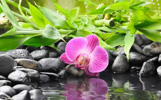 орхидея, камни