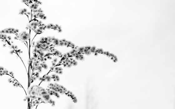 цветок, зима