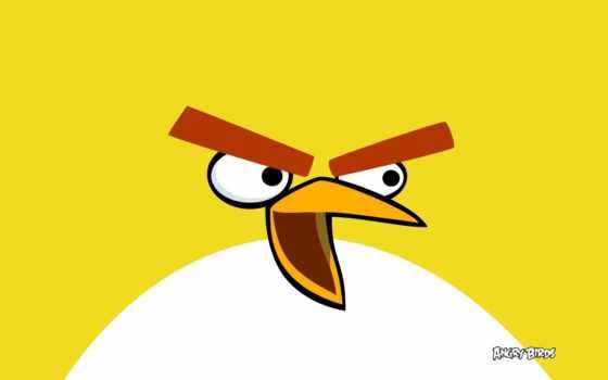 angry, birds, bird