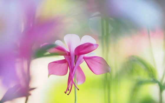 cvety, обоях, nazad