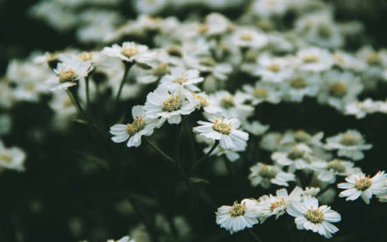 нежность, цветочки, утро