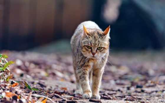 кот, осень, прогулка, уставший, тонкий,