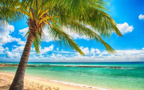 природа, рай, море, пляж, tropical, ocean, sunshine, palms, summer, пальмы,
