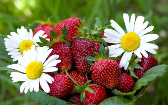 клубника, ромашки, саженцы, еда, земляники, ягоды, клубники, корзине,