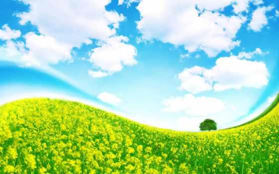 небо, трава, oblaka, дерево, поле, cvety, изгиб, луг,