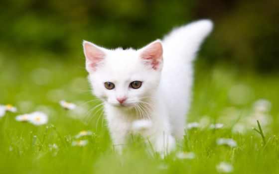 котенок, white, сонник, травка