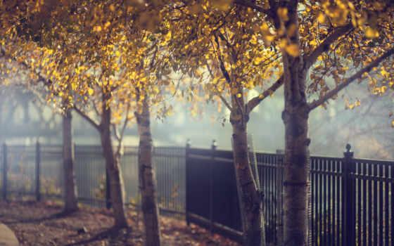 осень, забор