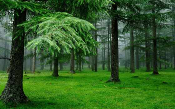 лес, природа, трава