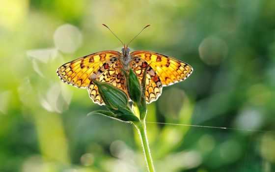 бабочка, желтая, fone, makro, ярких,