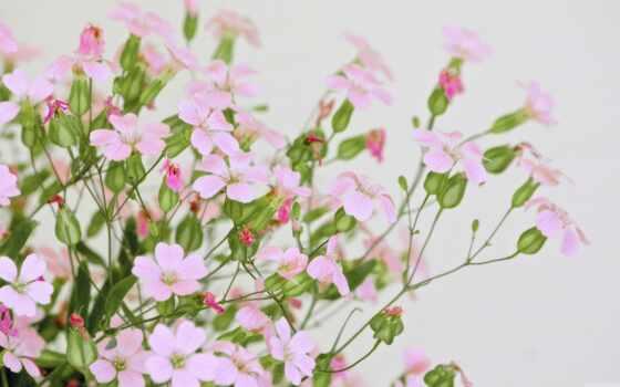 розовый, цветы, flowers