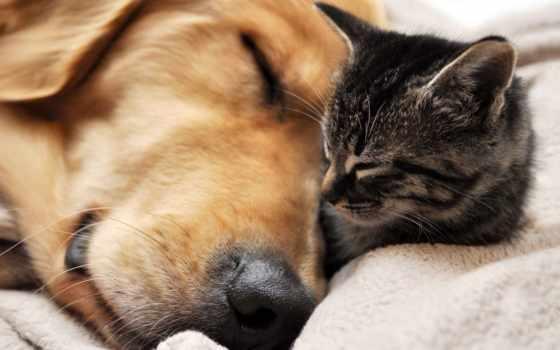 собака, кот, cats, dogs, щенок, cute, funny,