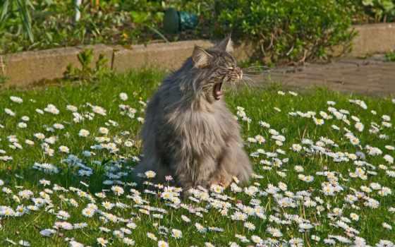 весна, коты, пришла, котов, zhivotnye, ними, орущие, foto, новости,