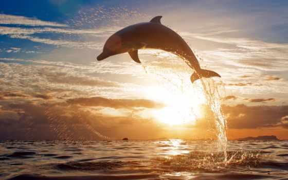 дельфины, закате, дельфин, море, закат, фотообои, zhivotnye, waves, fone, прыгают,