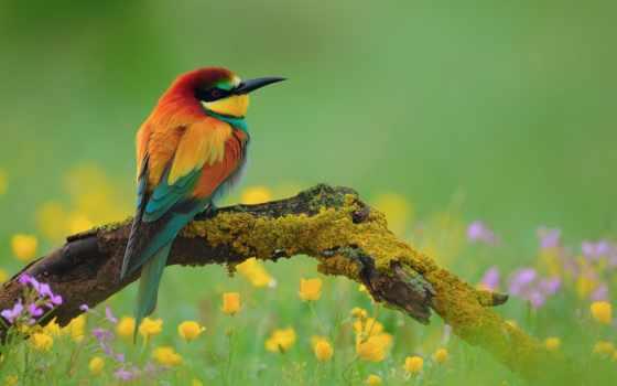 пчелоедка, золотистая, щурка, птица, птичка, branch, other, интересное, name, her, хочу,