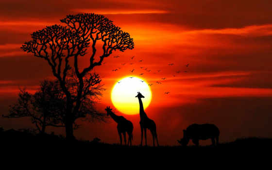 разное, atardeceres, mundo, природа, los, sun, damien, сафари, mejores,