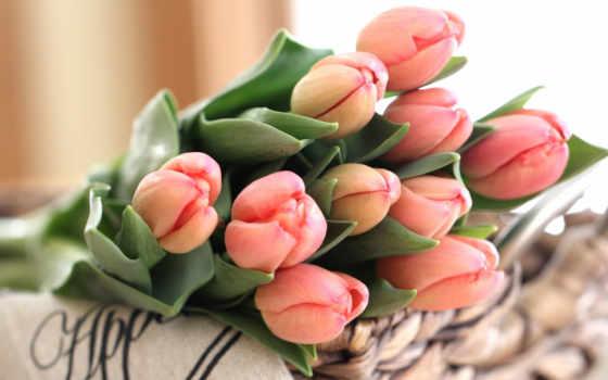 тюльпан, букет, cvety, бутон, коллекция