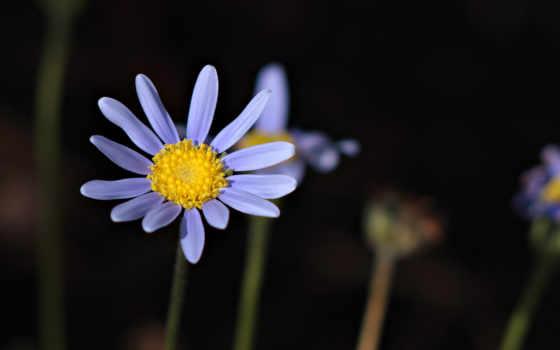 лепестки, цветок Фон № 2200 разрешение 1920x1080