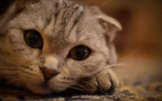 взгляд, кошка