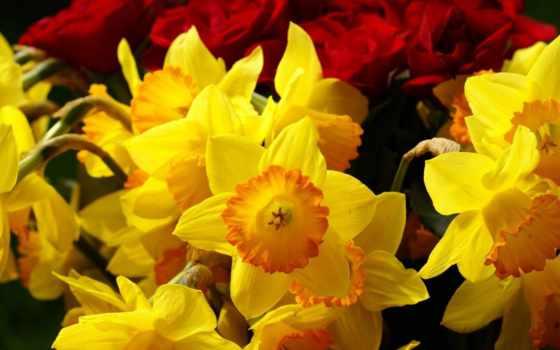 нарциссы, цветы, желтые Фон № 60855 разрешение 1920x1080