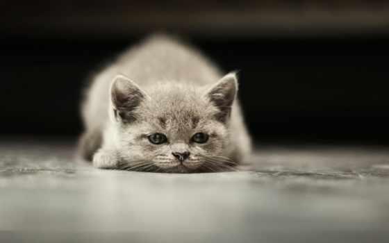 грустный, кот, kitty