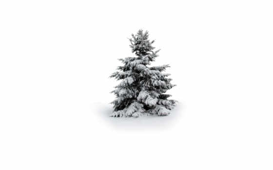 снег, елка, zima,