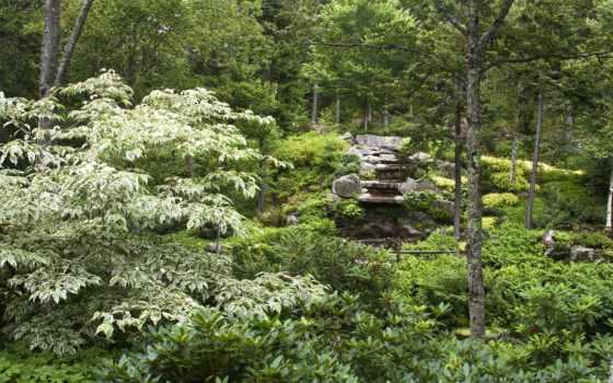 природа, лес, картинка