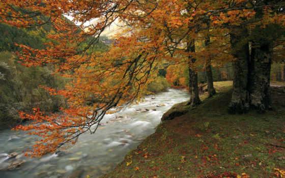 дек, дерево, река