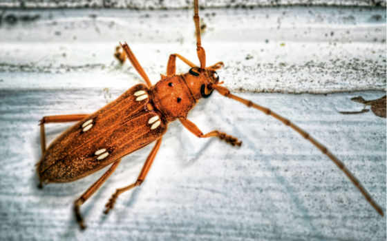 усики, las, insectos, работы, antenas, гладь, cleaning,