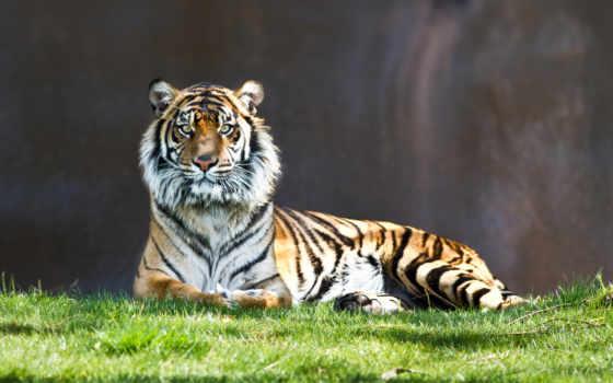 красивые, природы, природа, zhivotnye, найти, кот, white, широкоформатные, кошки,
