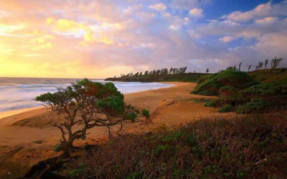 пляж, kauai, donkey, hawaii,