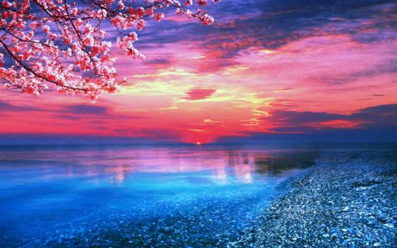 море, sun, закат, cvety, fone, моря, заката, берег, Сакура, bewitching,