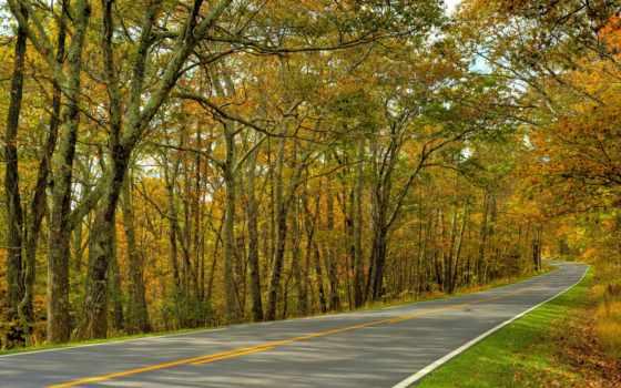 дорога, осень, trees, landscape, лес, природа, stock,