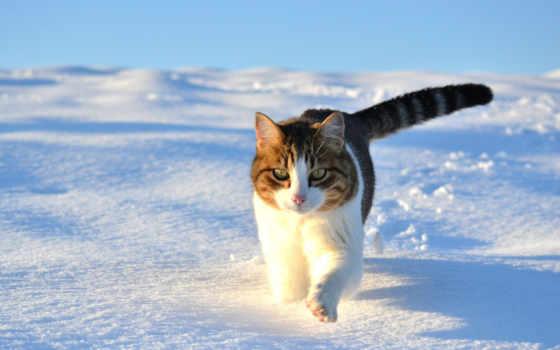 winter, снег, кот, кошки, прогулка, iphone, зимой, снегу,