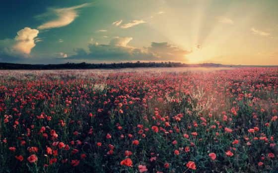 поле, facebook, cvety, красивые, природа, landscape, заставки, небо, закат, цветочки, весна,