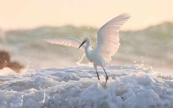 egret, птица, water, animal, взгляд, preview, id, животные, тег