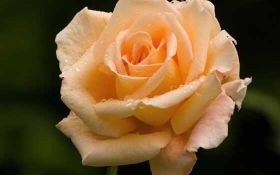 роза, otzyv, доехать, entrance, адрес, time, работать, map