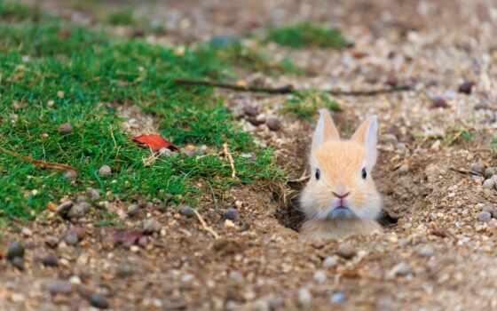 кролик, остров, картинка, prank, tourist, прикол, прикольный, funny