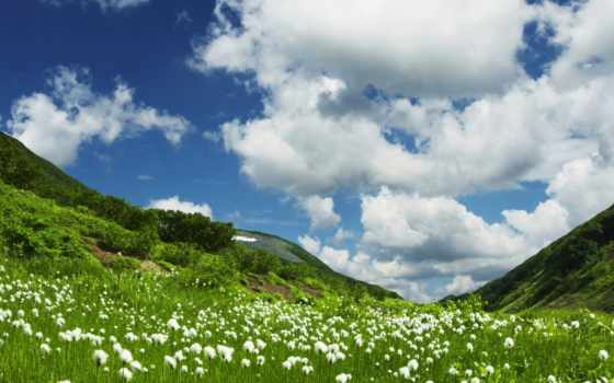 grassland, summer