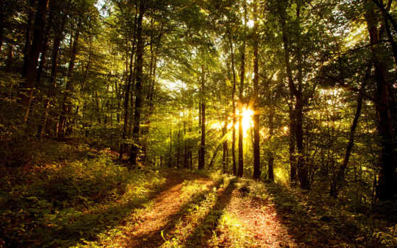 солнце, лесу
