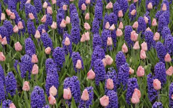 кровать, тюльпаны, тюльпанов