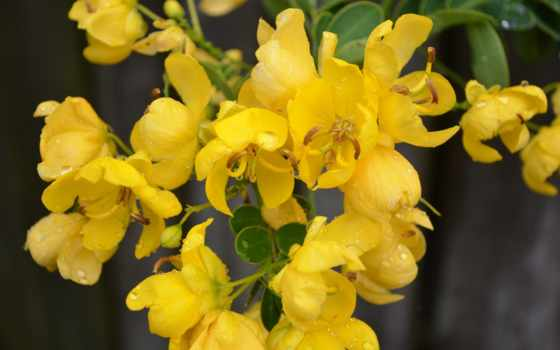 yellow, free, страница